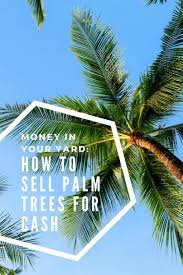 in your yard how to sell palm trees for