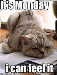 Good Morning Cat Meme - i hate monday animals pinterest mondays funny morning and humor