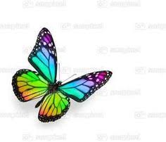 rainbow butterfly search ideas