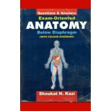 Human Anatomy Exam Questions U0026 Answers Exam Oriented Anatomy Below Diaphragm With Colour