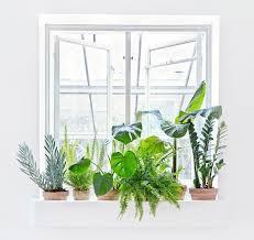 purifier l air d une chambre des plantes d polluantes pour assainir votre maison les plantes