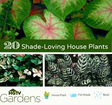 20 gorgeous indoor shade house plants container gardening