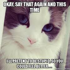 Sarcastic Cat Meme - okay say that again and this time i ll pretend to be stupid so