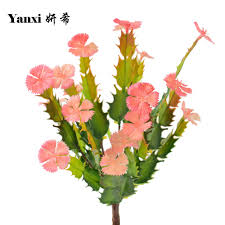 Kitchen Cactus Cactus Red Flower Promotion Shop For Promotional Cactus Red Flower