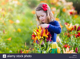 cute little picking lily flowers in blooming summer garden