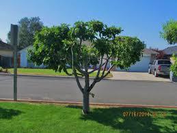 trees and shrubs gardening in washington state washington
