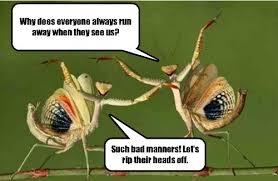 Mantis Meme - i can has cheezburger praying mantis funny animals online