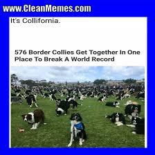 Clean Memes - dog memes page 3 clean memes