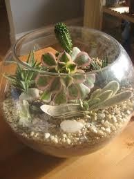succulent terrarium aquarium images