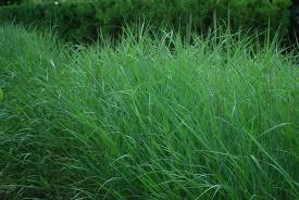 fiber optic grass dirt simple