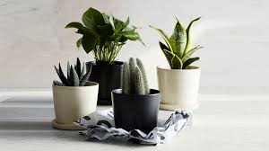 Modern Houseplants by Where To Buy Planters And Flower Pots For Outdoor And Indoor