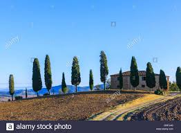 house with the famous cypress trees in the heart of the tuscany