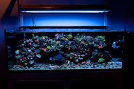 Aquarium Led Lighting Fixtures 9w Aquarium Led Light Diy Led Aquarium Light Waterproof Led