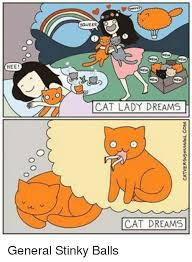 Funny Cat Lady Memes - 25 best memes about dreaming cat dreaming cat memes