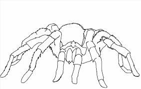 100 ideas printable spider coloring pages emergingartspdx