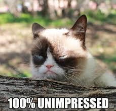 Meme Grumpy Cat - grumpy cat meme grumpy cat pictures