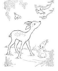 deer coloring wild animal buck deer coloring pages kids