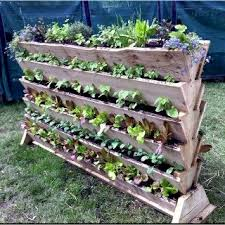 growing enough food for your family in small backyards off the grid
