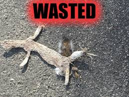 Wasted Meme - wasted squirrel imgflip