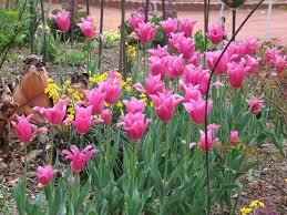 images about gardens landscaping on pinterest perennials flower