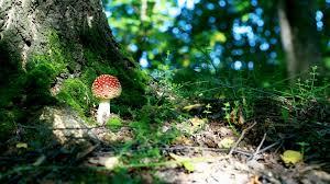 mushroom tag wallpapers mushroom free nature wallpapers for