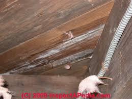 decor of hardwood floor molding moldy subflooring in buildings