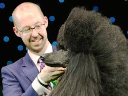 boxer dog crufts 2014 crufts best in show ricky the poodle really is the top dog the