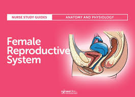 Female Sexual Anatomy Pictures Top 25 Best Female Reproductive System Anatomy Ideas On Pinterest