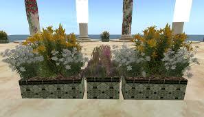 flowers ahuva u0027s blog