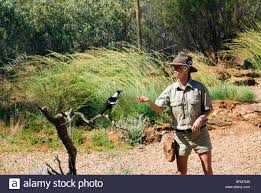native australian desert plants australia northern territory alice springs native birds show at