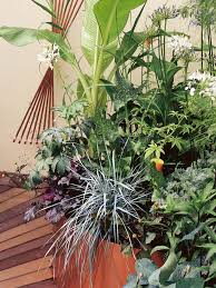 Flowering Patio Plants 91 Best Container Gardening Landscaping Images On Pinterest