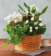 sympathy plants sympathy flowers sympathy plants sympathy flower delivery