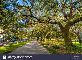 walkway and trees with moss at forsyth park in