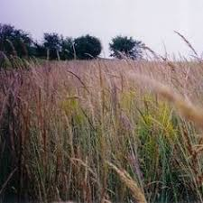 prairie moon nursery seed sales to canada lots of grasses