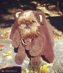 Ewok Halloween Costume Baby 25 Ewok Dog Costume Ideas Small Dog Costumes