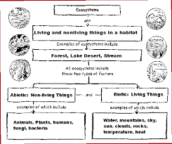 science worksheets ecosystem virus a tiny nonliving particle