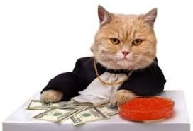 Business Cat Memes - business cat meme office cat meme