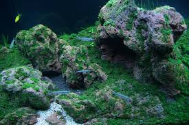 Aquascape Moss Fiss Mini Mountain Aquascaping World Forum