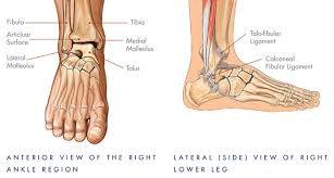Top Foot Anatomy Your Ankle Ankle Replacement