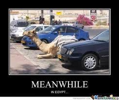 Camel Meme - camel parking your argument is invalid by harby meme center