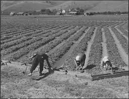 Their Home by File San Jose California Farm Family In Their Strawberry Field