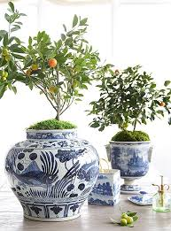 potting an indoor tree in 3 easy steps one our