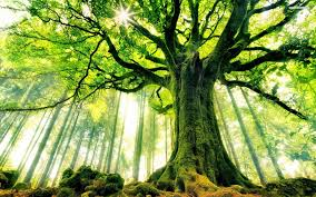symbolism of a tree the meaning and symbolism of the word trees