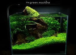 Aquascape Designs For Aquariums 76 Best Aquarium Images On Pinterest Aquarium Ideas Aquascaping