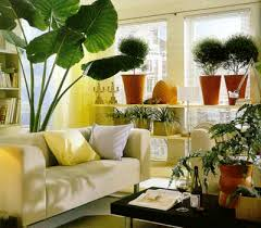 home decor with plants foundation dezin decor indoor plants for living room plant home