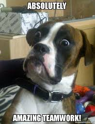 Teamwork Memes - absolutely amazing teamwork skeptical dog make a meme
