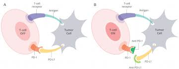 principles of cancer immunobiology and immunotherapy of solid