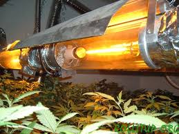 plant light for weed high pressure sodium hps lights the weed scene