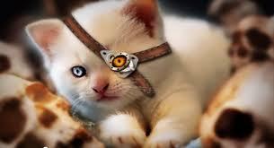 Chions League Meme - welcome to the league of cats leagueoflegends