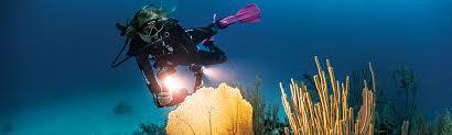 sea dragon 2500 photo video dive light sea dragon 2500 sealife underwater cameras sealife underwater